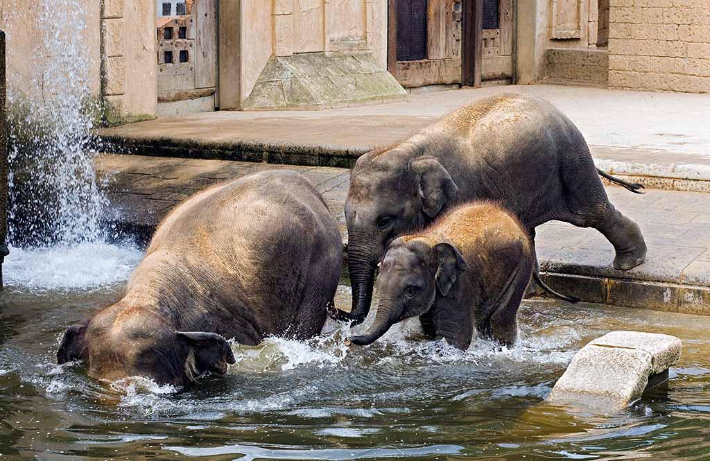 Erlebnis-Zoo Hannover, Elefantengehege nach dem Vorbild eine indischen Tempels; Foto: Martin+Kirchner